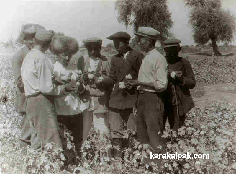 Inspecting the Karakalpak cotton crop