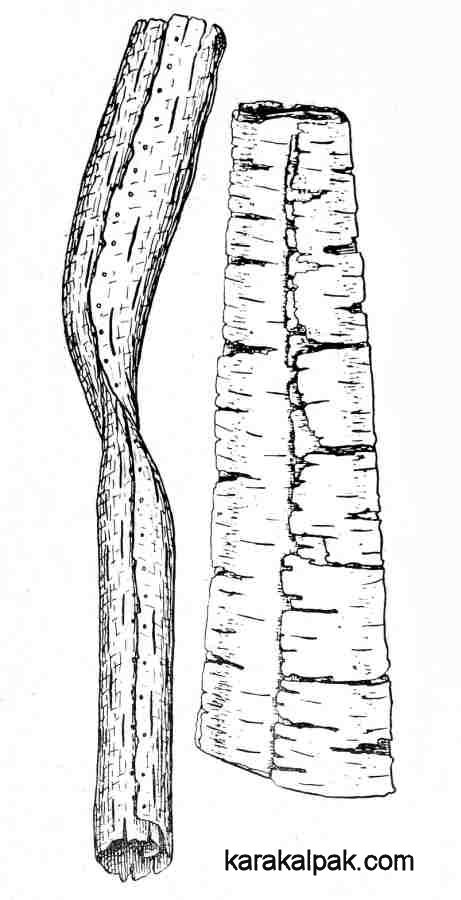 Drawings of Qipchaq birch bark tubes